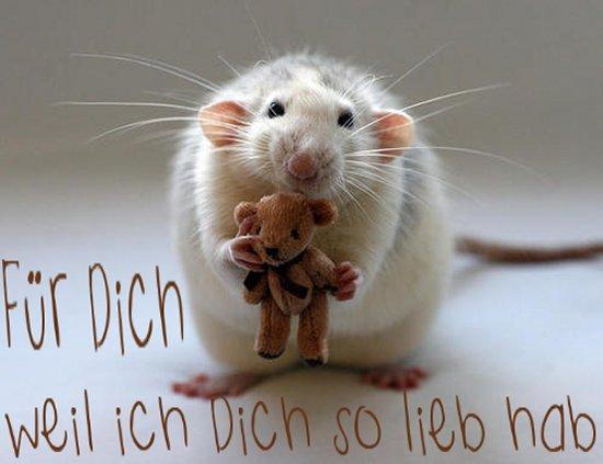 HDL hab dich lieb  maus schenkt teddy