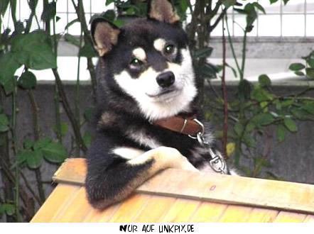 gbpics der coole hund