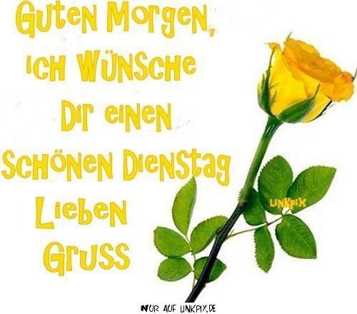 Dienstag Gelbe Rose