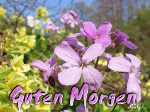 gbpics Guten Morgen Blumen