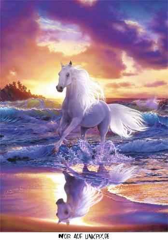 fantasy_horse